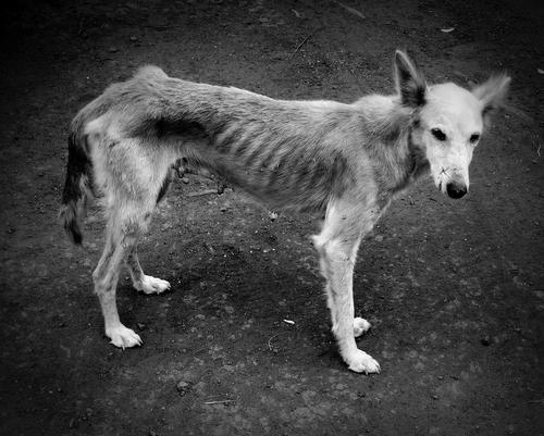 Znęcanie się nad zwierzętami – przestępstwo znęcania się nad zwierzętami i obrona przed niesłusznym oskarżeniem o znęcanie się nad zwierzętami
